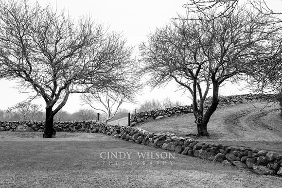 Bare Trees and Stone Walls, Beacon Hill, Block Island