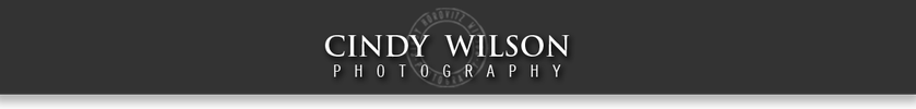 Cindy Wilson Photography