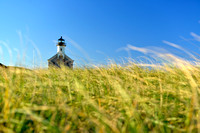 North Light with Soft Grasses