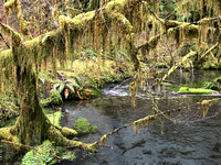 River, Hoh Rain Forest