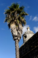 Corner Turret and Palm Tree, Ponta Delgada